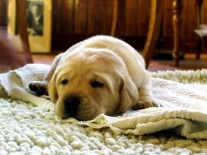 שטיחים - מדוע לקנות חדש
