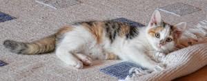 ניקוי שטיחי קילים